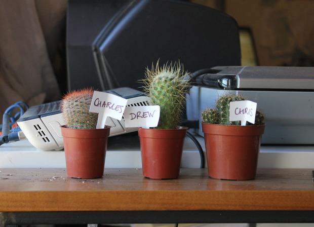 ThePrincipals-cactus-thumb-620x448-69143